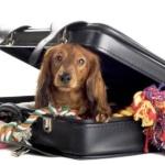 Green Pet facilita viagens do seu melhor amigo