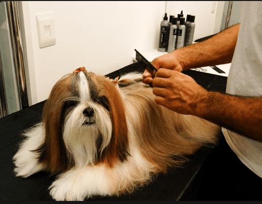 Onda Pet: animais tratados como seres humanos.