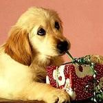 Evite stress em seu cão durante as festas de Final de Ano