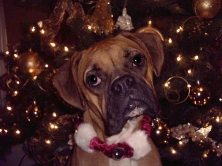 Passe um Natal feliz com o seu melhor amigo.