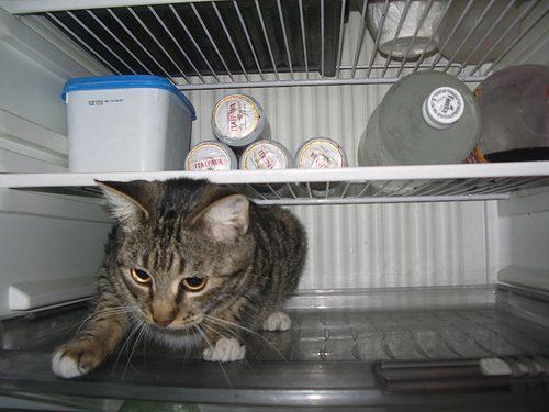 Dicas pra proteger gatos do calor.