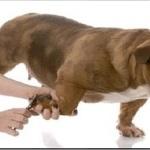 Cuidados básicos ao cortar as unhas de cães e gatos