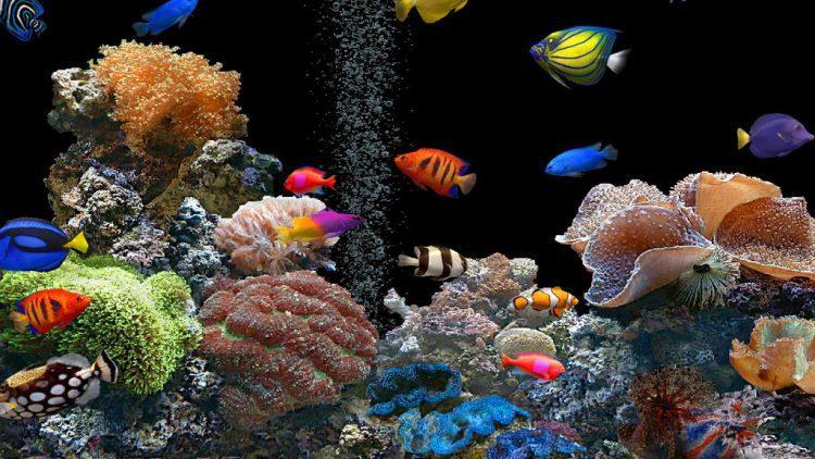 Dicas preciosas para escolher o aquário ideal