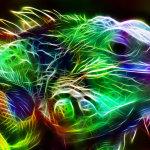 O universo fascinante do camaleão