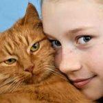 A fascinante genética das raças de gatos