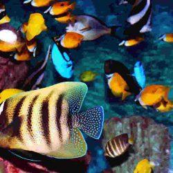 O fascinante universo da aquariofilia