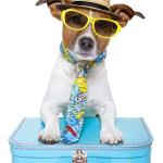 Dicas de hotel para o seu cachorro