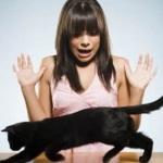 Meu medo de gatos