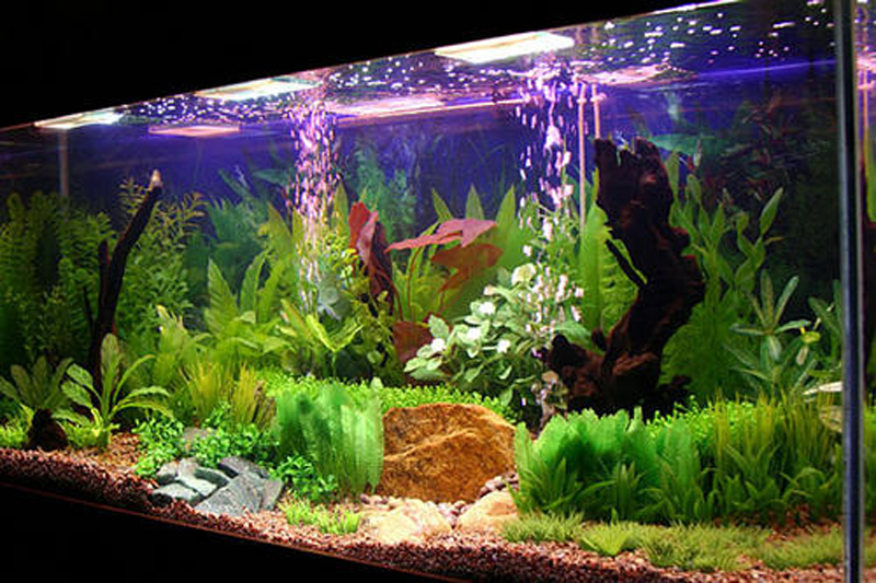 belo aquário