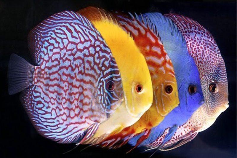peixes coloridos e belos