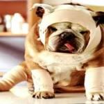 8 dicas que podem salvar seu PET na emergência
