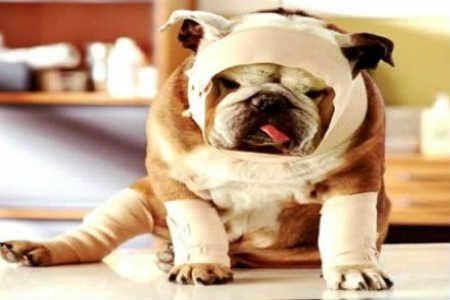 Dicas para Salvar seu Pet na Emergência