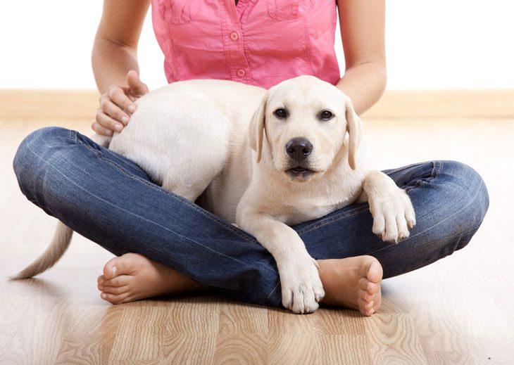 Reiki para animais de estimação