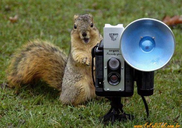 Esquilo: fofo, exótico e zangado