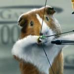 O roedor fofo que não é asiático e nem porco