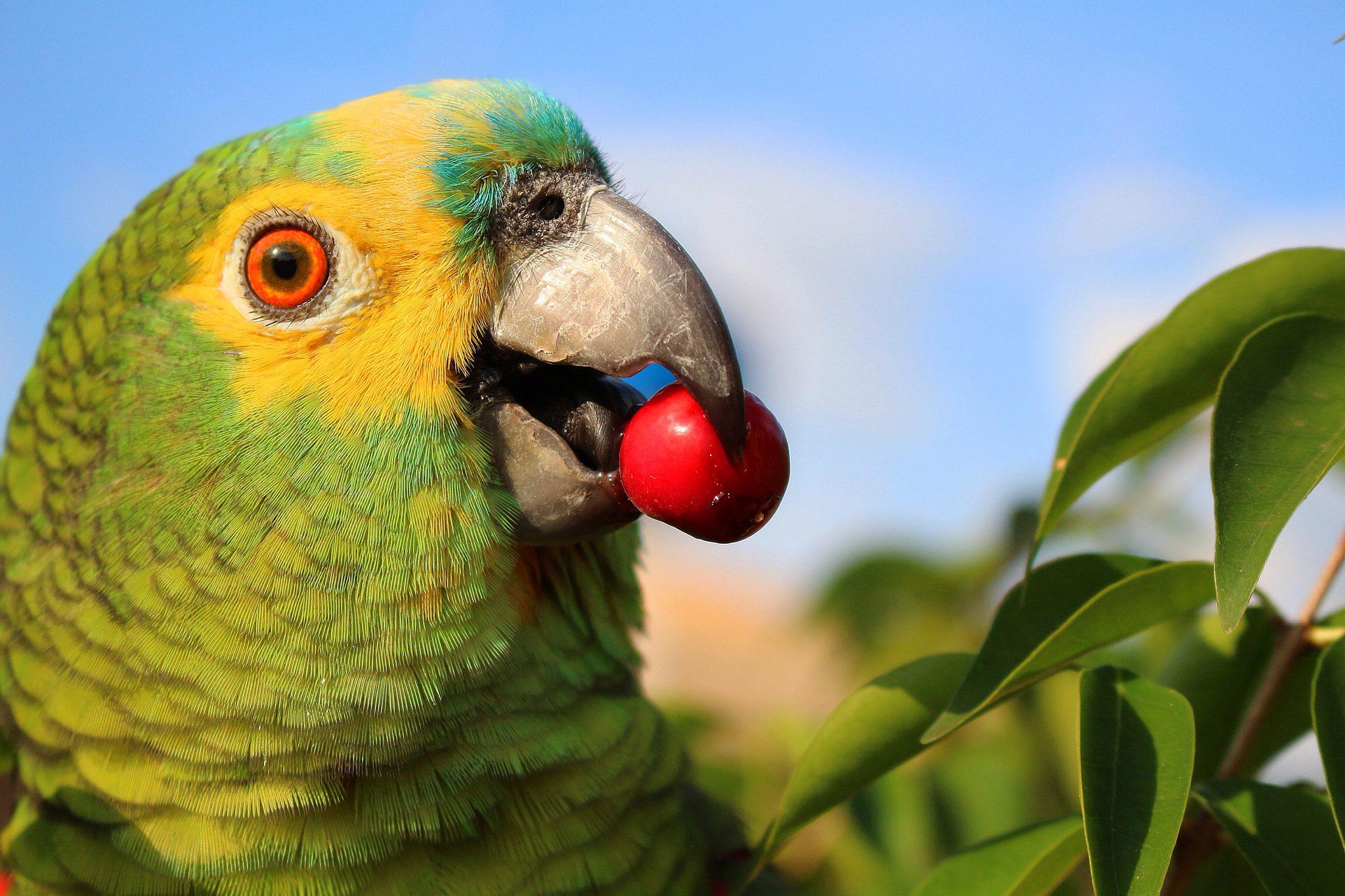 Papagaio Dicas Incríveis sobre esta Ave Encantadora