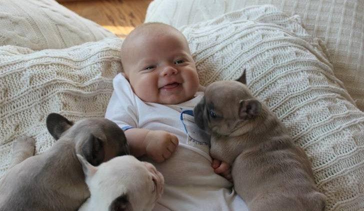Bebês e Cachorros: ser feliz vale a pena (Veja Vídeo)