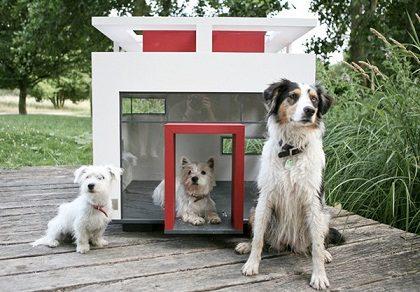 Como adaptar sua moradia para cães