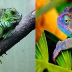 Conheça as diferenças entre Iguana e Camaleão