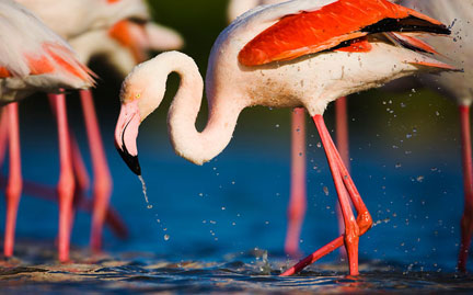 Os tipos mais comuns de bicos de aves