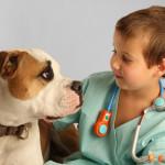 Veterinário: Como escolher um bom profissional?
