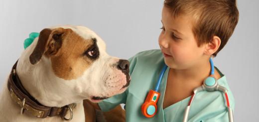 Dicas para escolher um bom veterinário