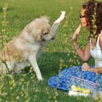 Bom pra Cachorro: cuidados essenciais com seu melhor amigo