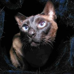 Como cuidar de gatos