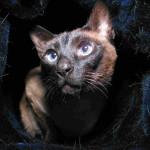 O pulo do gato: guia essencial da convivência