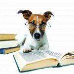 Dicas preciosas para educar seu cão