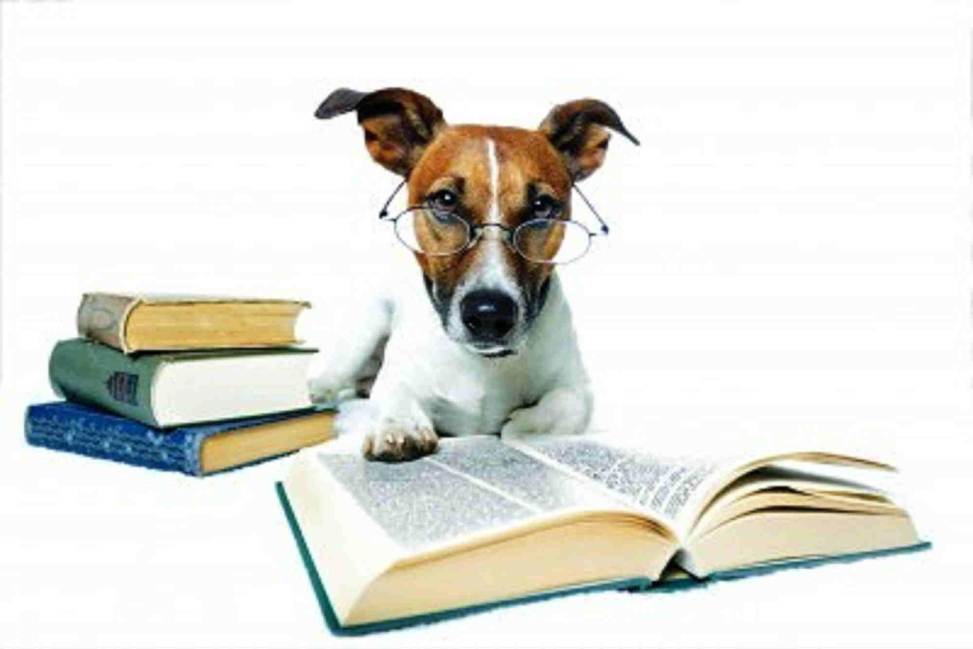 Como Educar Cães