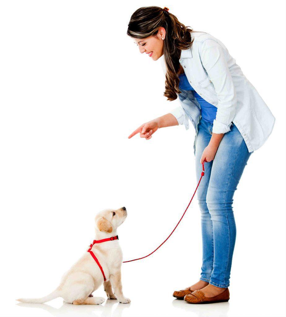 Como Educar o Seu Cão