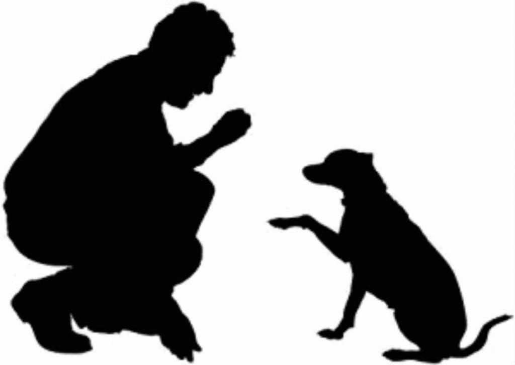 Educação de Cães