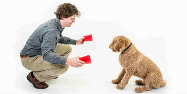 Adesrtramento de Cães