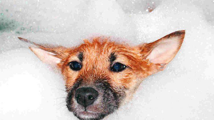 Escolha o pet shop adequado pra higienizar seu cão