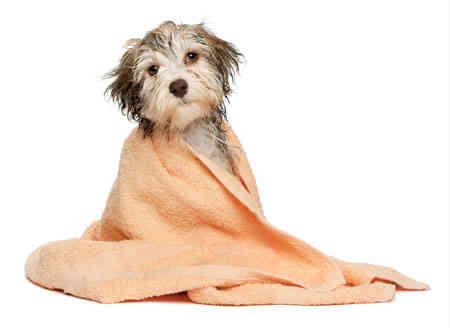 Dicas de ouro para um gostoso banho de cachorro