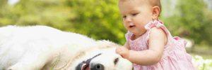 Labrador e crian