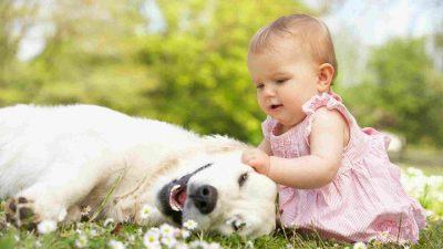 Mitos e Lendas sobre o apaixonante Labrador Retriever