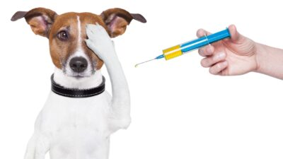 Pets não transmitem Covid-19 nos humanos