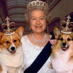 O vira-lata da rainha que ninguém enxerga